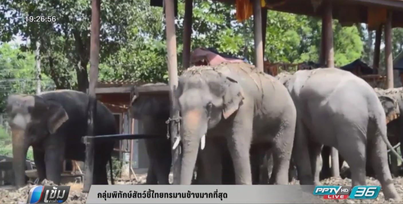 """กลุ่มพิทักษ์สัตว์ชี้ไทย """"ทรมานช้าง"""" มากที่สุด"""