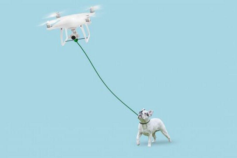 โดรนพาน้องหมาเดินเล่น เทคโนโลยีใหม่เอาใจคนรักสุนัข