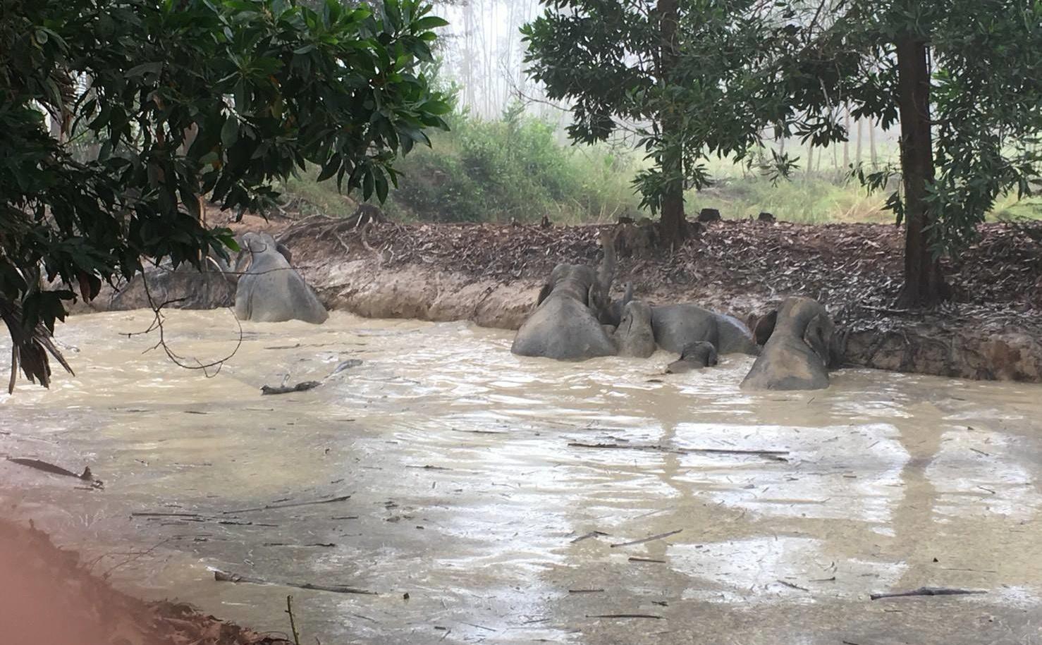 เอาใจช่วย! จนท. ระดมกำลังช่วยช้างป่า 7 ตัว ตกสระน้ำนาน 8 ชม.
