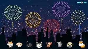"""""""ทาสหมา-ทาสแมว"""" พึงระวังเสียงพลุฉลองปีใหม่ทำ """"สัตว์เลี้ยง"""" หนีออกจากบ้าน"""