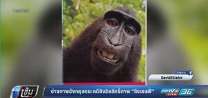 """ช่างภาพอังกฤษชนะคดีชิงลิขสิทธิ์ภาพ """"ลิงเซลฟี่"""""""