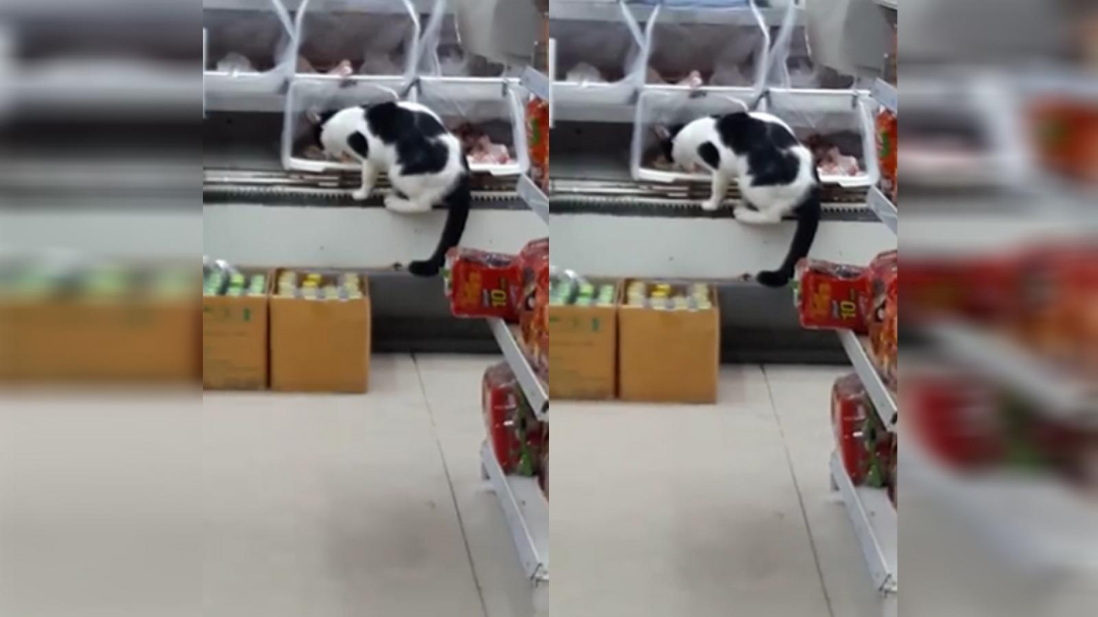 ชาวเน็ตแชร์! แมวย่องเบากินไก่ในห้าง หวั่นสินค้ามีเชื้อโรค