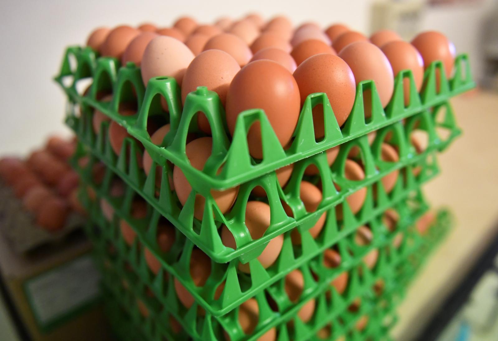 ตรวจพบสารก่อมะเร็งในไข่ไก่แบบโรงเปิด จ.สมุทรสาคร