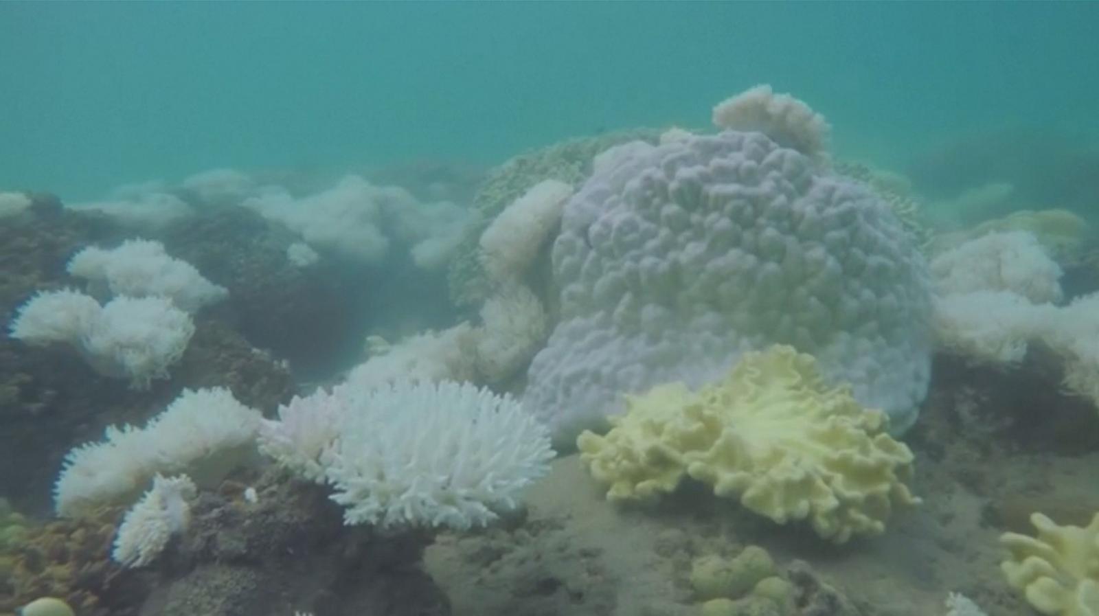 นักวิจัยเผยปะการังฟอกขาวเพิ่มขึ้นเกือบ 5 เท่า จากปี 1980