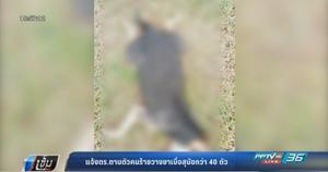 แจ้งตำรวจตามตัวคนร้ายวางยาเบื่อสุนัขกว่า 40 ตัว