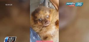 หมอปฏิเสธทรมานสุนัขก่อนส่งคืน แต่ยอมรับย้อมสีขนสุนัขจริง