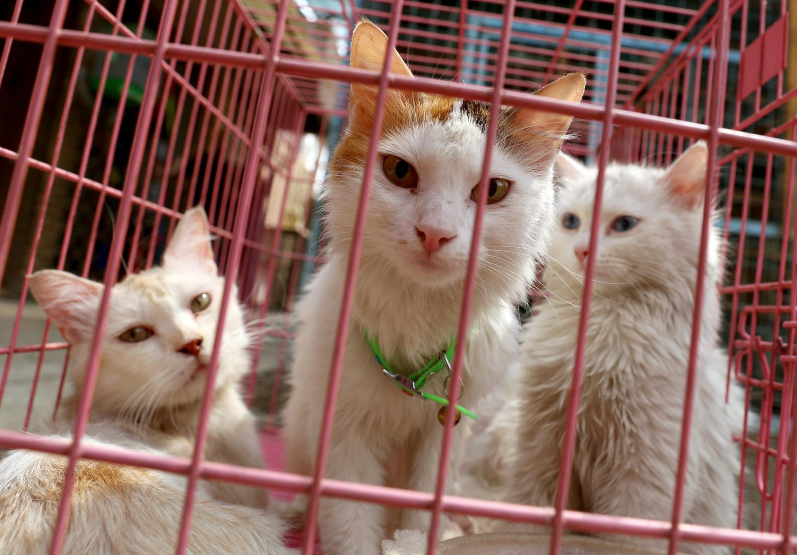 """ผู้เชี่ยวชาญ ชี้ """"แมวจรจัด"""" เป็นมหันตภัยร้ายแรงต่อระบบนิเวศ"""