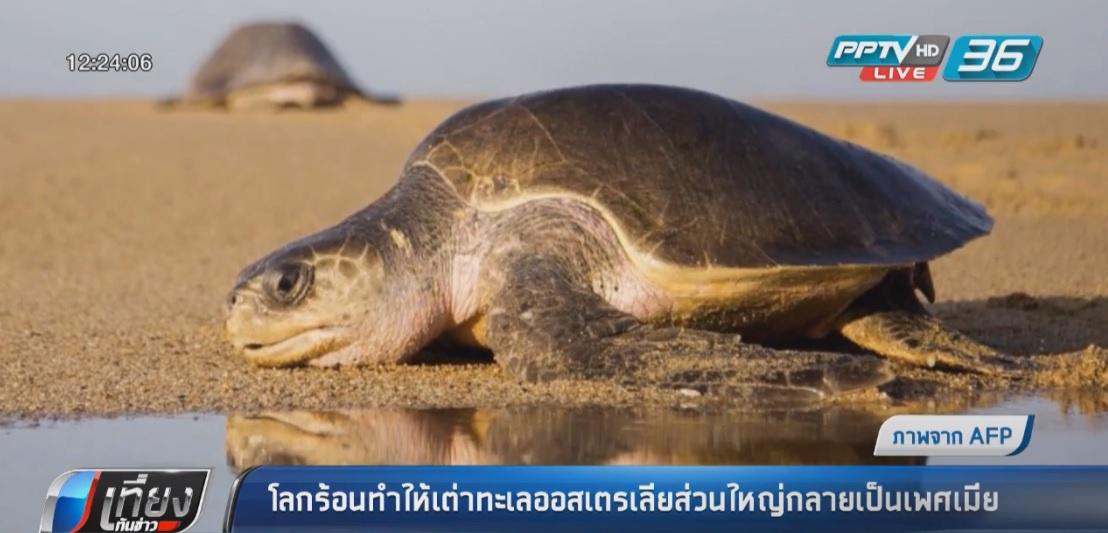 โลกร้อนทำให้เต่าทะเลกลายเป็นเพศเมียหมด