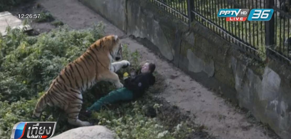 จนท.สวนสัตว์รัสเซียถูกเสือตะปบ รอดตายหวุดหวิด