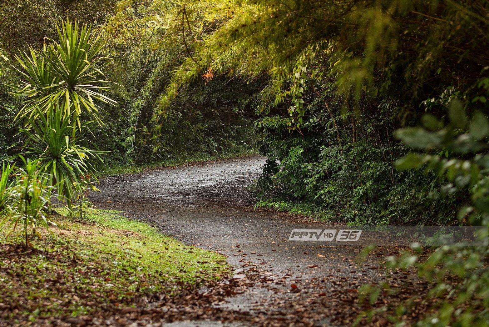 กรมควบคุมโรค แนะปลูกต้นไม้รอบบ้าน ช่วยฟอกอากาศลดปัญหามลพิษ