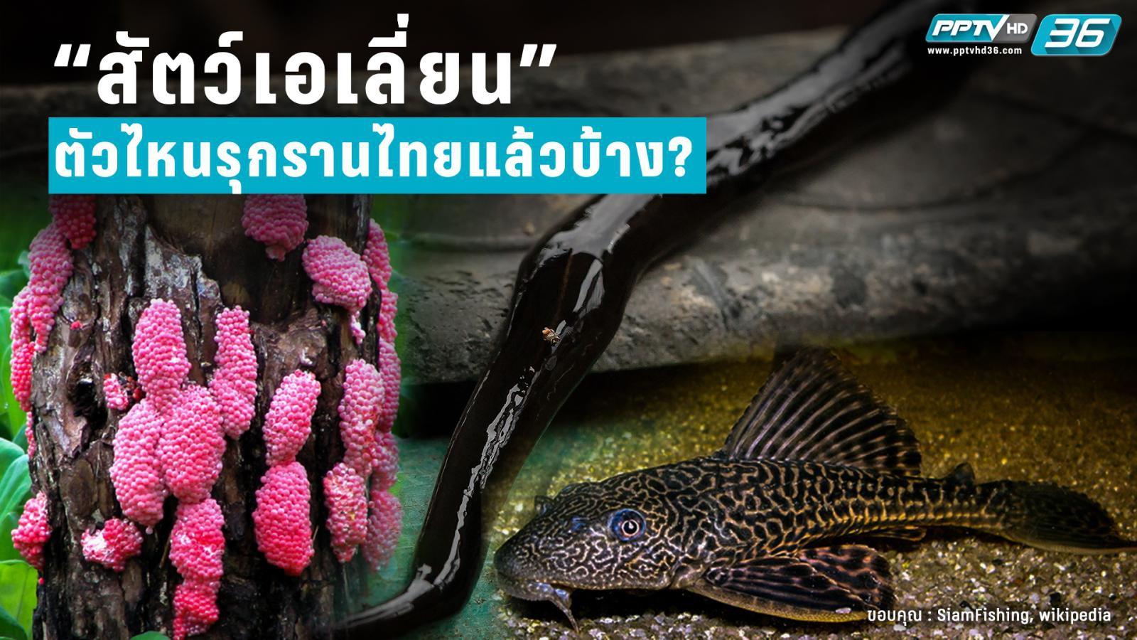 """โฉมหน้า """"สัตว์เอเลี่ยน"""" ที่รุกรานไทย"""
