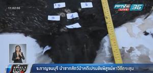 """จ.กาญจนบุรี พิสูจน์ซากเสือดำ """"คดีเปรมชัย"""" ซ้ำ พบรอยกระสุน 8 รู"""