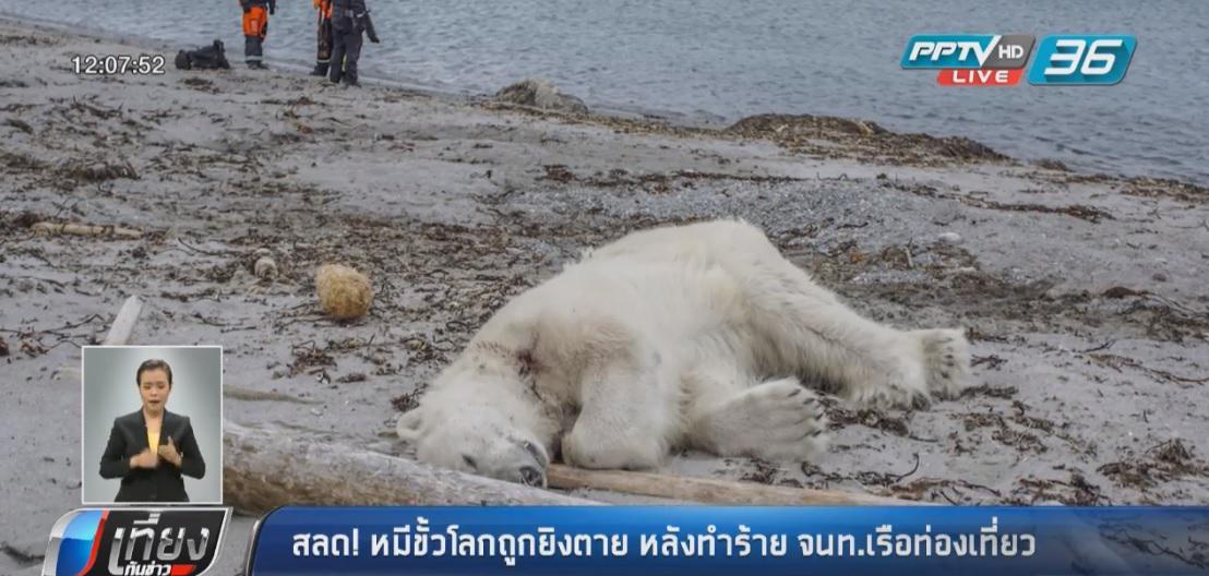 สลด!! หมีขั้วโลกถูกยิงตาย หลังทำร้าย จนท.เรือท่องเที่ยว