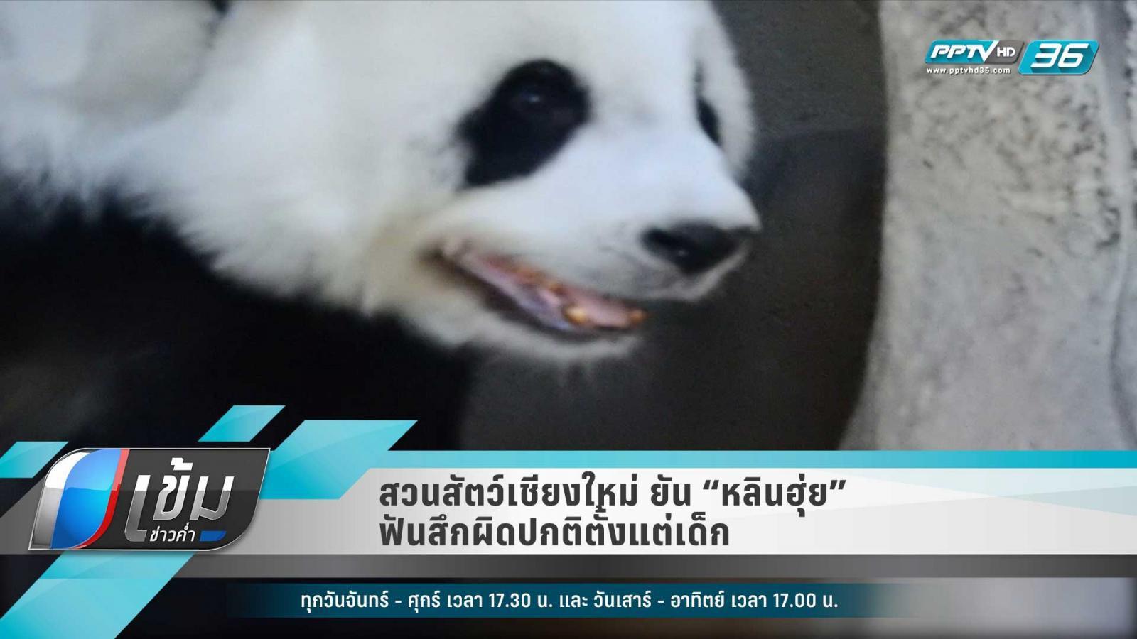 """""""สวนสัตว์เชียงใหม่"""" รับ """"หลินฮุ่ย"""" ฟันสึกจริง แต่เป็นตั้งแต่เกิด"""