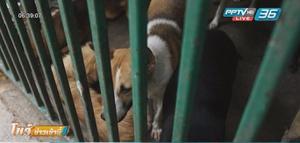 """กรมปศุสัตว์ยันคุมการระบาดของ """"โรคพิษสุนัขบ้า"""" ได้"""