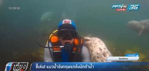 ขี้เล่น! แมวน้ำอังกฤษแกล้งนักดำน้ำ