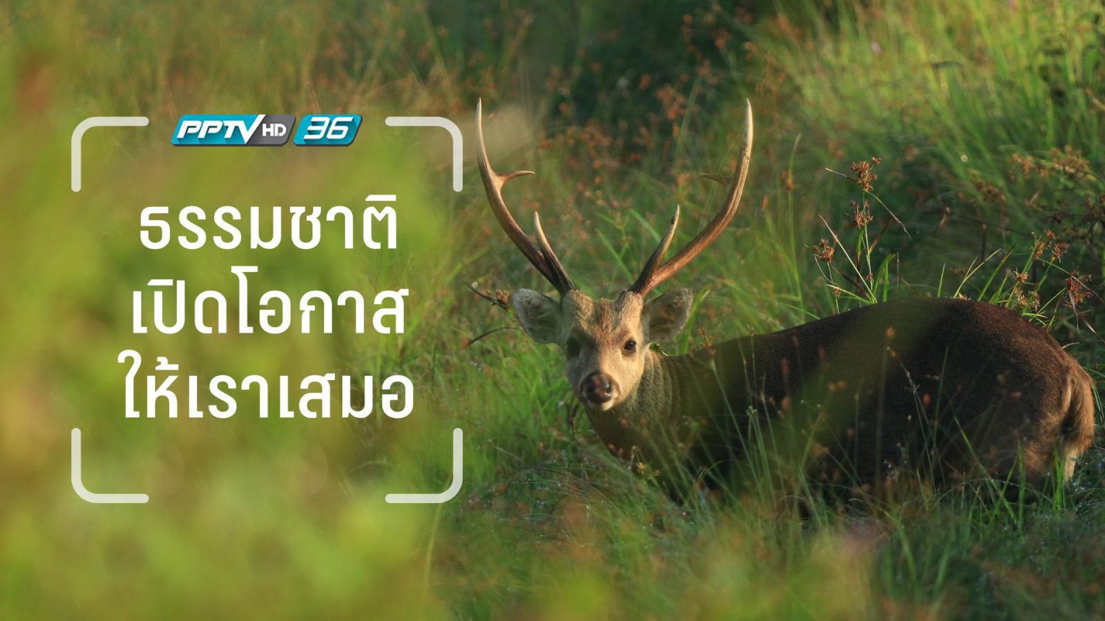 การถ่ายภาพชีวิตสัตว์ป่า  สิ่งแรกที่ต้องมี คือ จิตสำนึกที่ดี