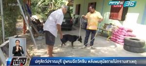 ปศุสัตว์ปราณบุรี ปูพรมฉีดวัคซีนหลังพบสุนัขตายไม่ทราบสาเหตุ