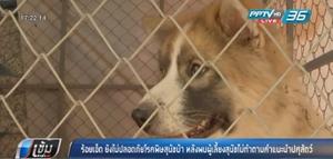 """ร้อยเอ็ดยังไม่ปลอดภัย """"โรคพิษสุนัขบ้า"""" หลังพบผู้เลี้ยงสุนัขไม่ทำตามคำแนะนำปศุสัตว์"""
