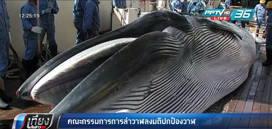 คณะกรรมการการล่าวาฬลงมติปกป้องวาฬ