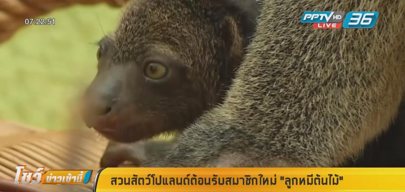 """สวนสัตว์โปแลนด์ต้อนรับสมาชิกใหม่ """"ลูกหมีต้นไม้"""""""