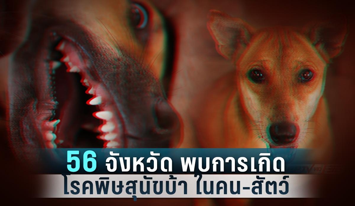 56 จังหวัดพบการเกิดโรคพิษสุนัขบ้าในคน-สัตว์