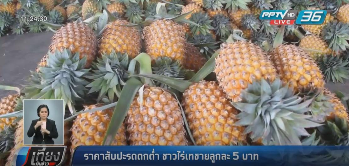 ชาวไร่เทขายสับปะรดลูกละ 5 บาท หลังราคาตกต่ำ
