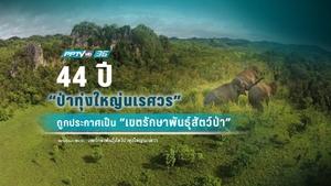 """44 ปี ประกาศ """"ป่าทุ่งใหญ่นเรศวร"""" เป็น """"เขตรักษาพันธุ์สัตว์ป่า"""""""