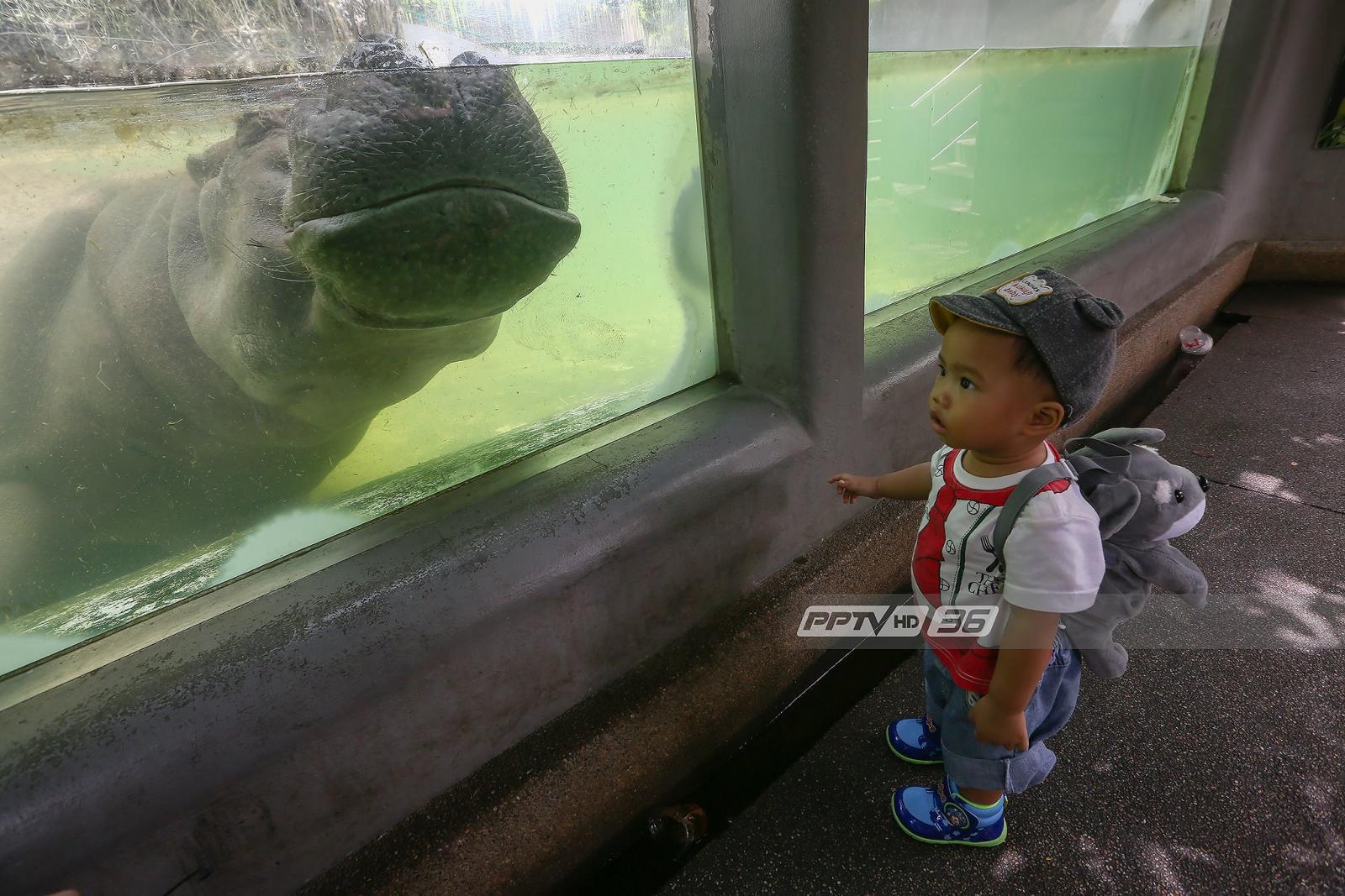 """ใครยังไม่ไปรีบเลย!! """"สวนสัตว์ดุสิต"""" แจงปิดสิ้นเดือน ส.ค.นี้"""