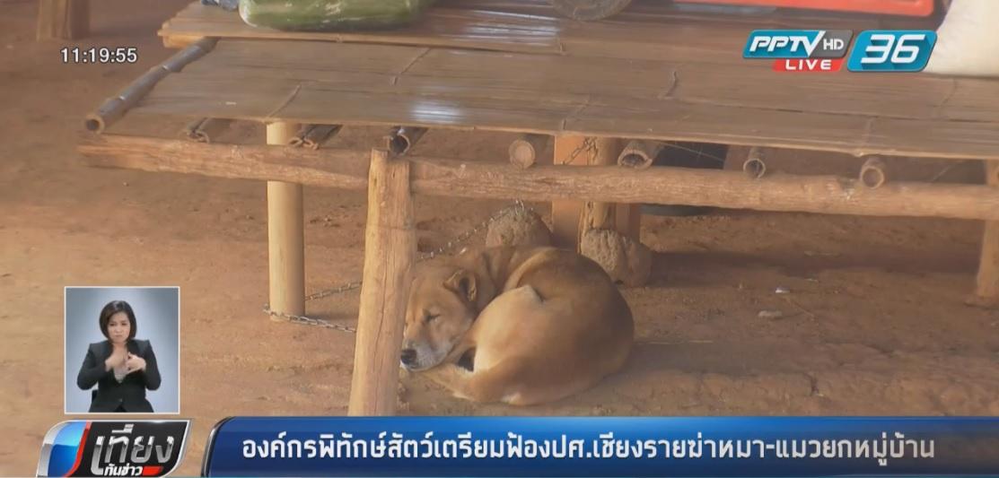 องค์กรพิทักษ์สัตว์เตรียมฟ้องปศ.เชียงรายฆ่าหมา-แมวยกหมู่บ้าน