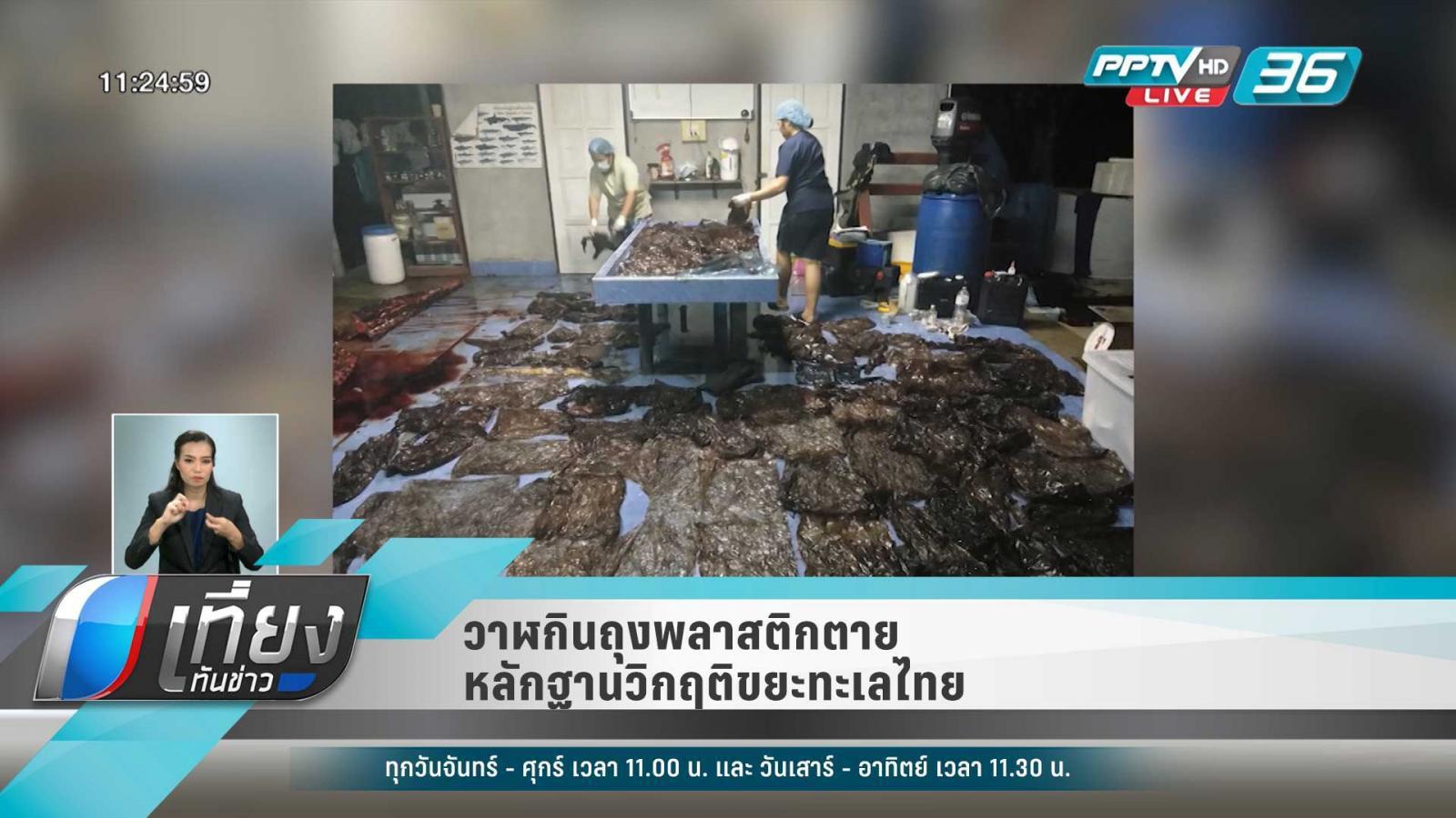 """""""วาฬกินถุงพลาสติกตาย"""" หลักฐานบ่งชี้วิกฤติขยะทะเลไทย"""