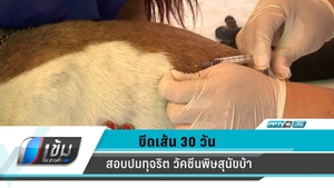 ขีดเส้น 30 วัน! สอบปมทุจริตวัคซีนพิษสุนัขบ้า