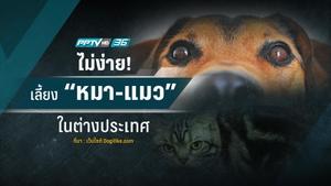 """ไม่ง่าย!! เลี้ยง """"หมา-แมว"""" ในต่างประเทศ"""