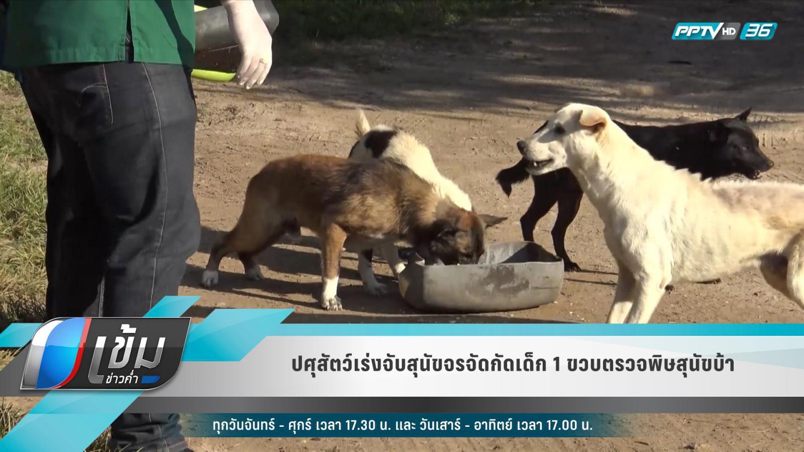 ปศุสัตว์เร่งจับสุนัขจรจัดกัดเด็ก 1 ขวบตรวจพิษสุนัขบ้า
