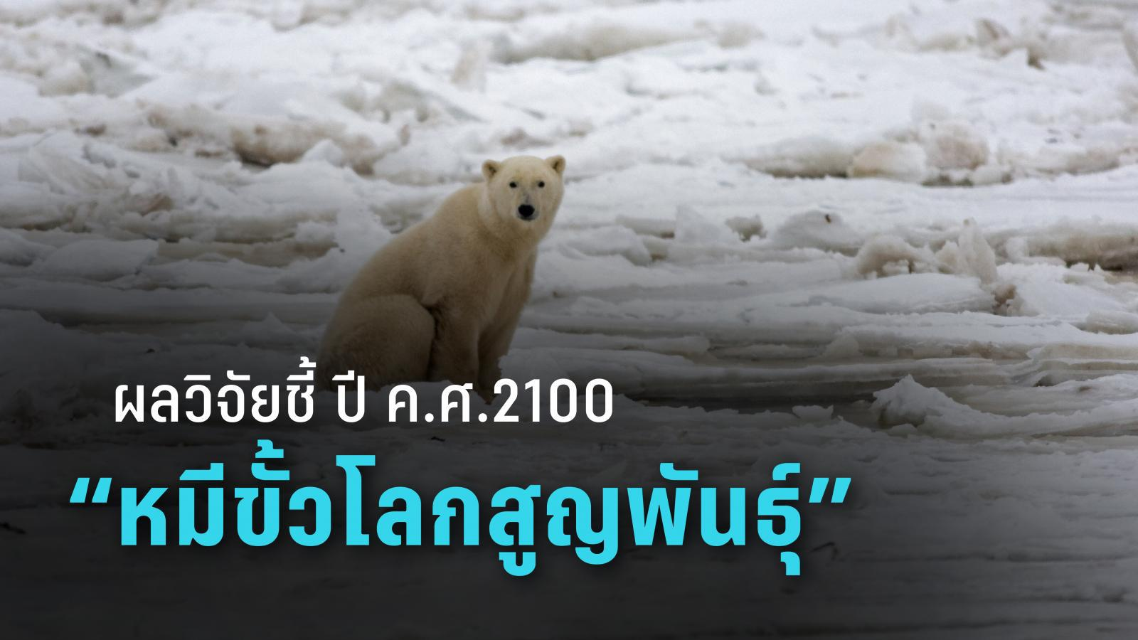 ผลวิจัย ชี้ ภาวะเรือนกระจก ส่งผลให้อีก 80 ปี หมีขั้วโลกอาจสูญพันธุ์