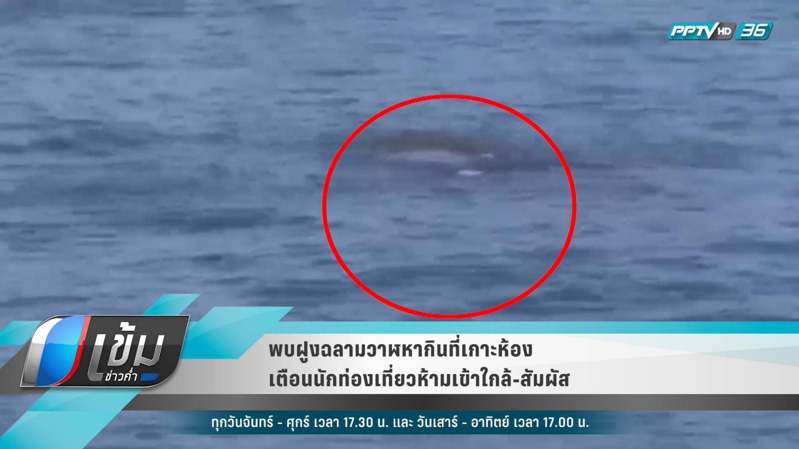 ฉลามวาฬนับสิบ โผล่เกาะห้อง