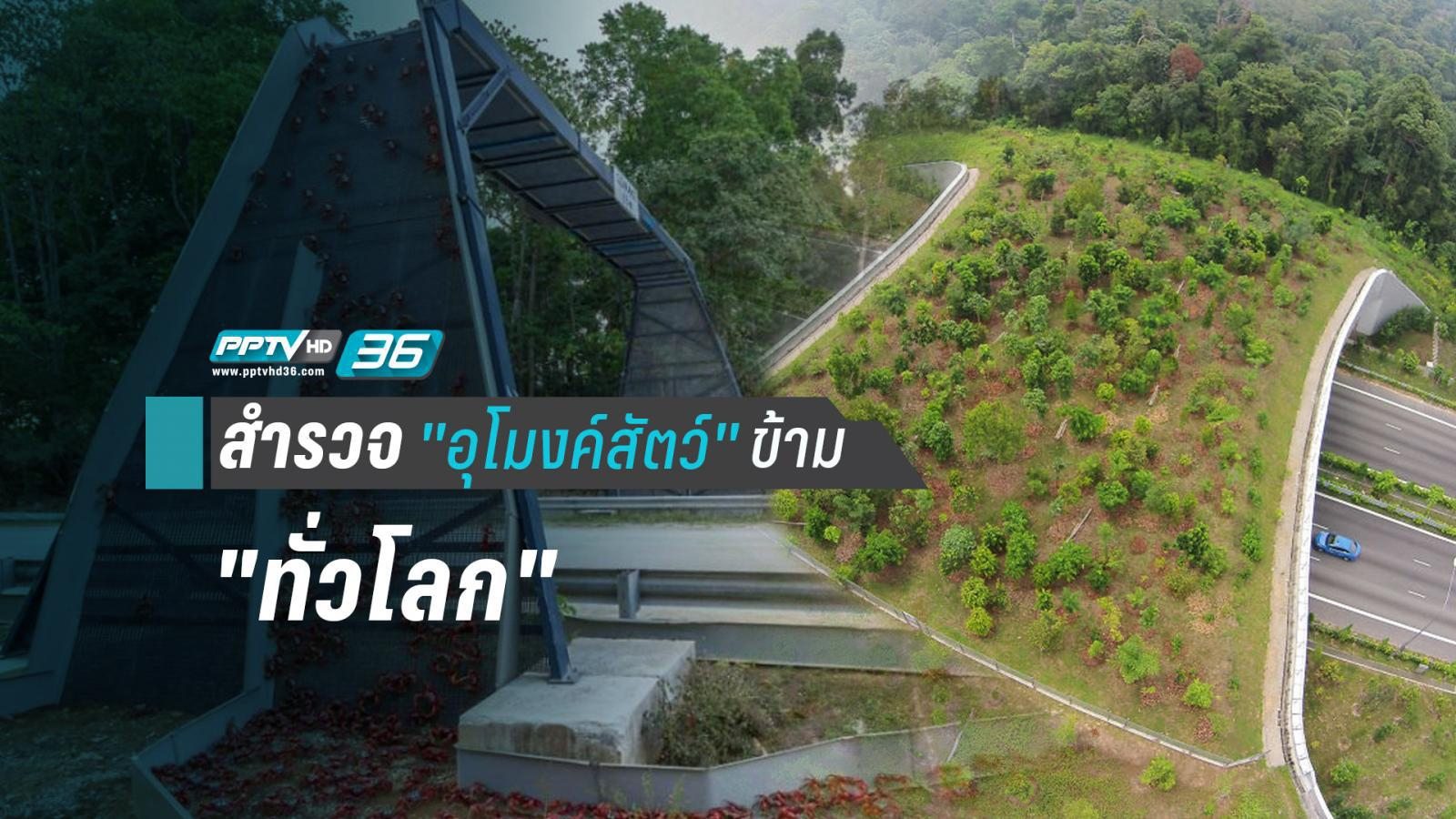 """เปิดใช้งานแล้ว """"อุโมงค์สัตว์ข้าม""""  แห่งแรกของไทย"""