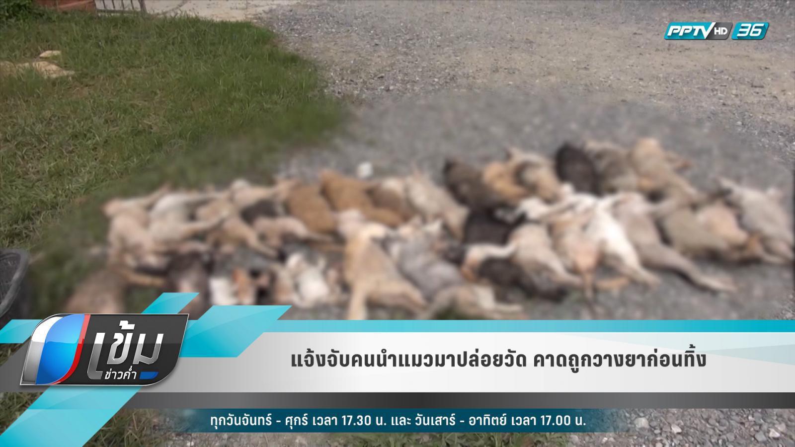 แจ้งจับคนนำแมวมาปล่อยวัด คาดถูกวางยาก่อนทิ้ง