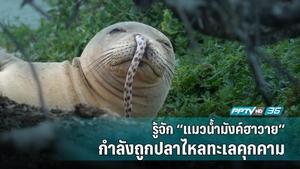"""""""แมวน้ำมังค์ฮาวาย"""" สัตว์ที่เคยถูกโหวตว่าอันตรายแต่ตอนนี้กำลังใกล้สูญพันธุ์"""