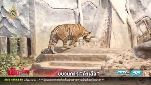 แฉ! วัดป่าหลวงตาบัวทำลูกกรอกเสือขาย ด้านเจ้าอาวาส-พระ เผ่นหนีเกลี้ยง