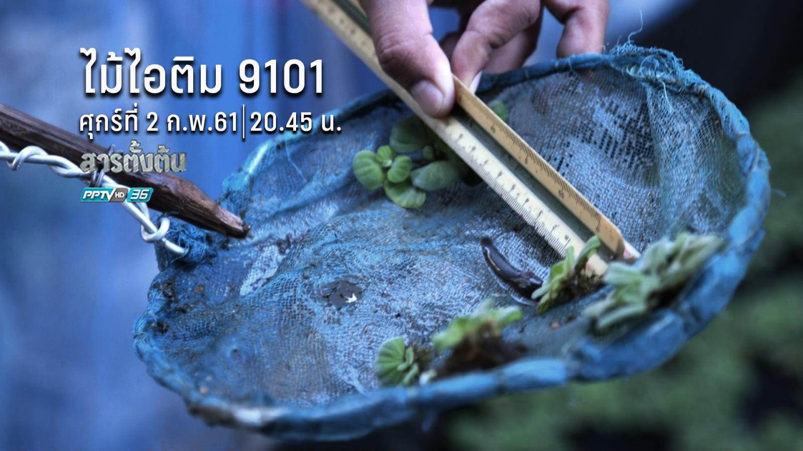 ไม้ไอติม 9101