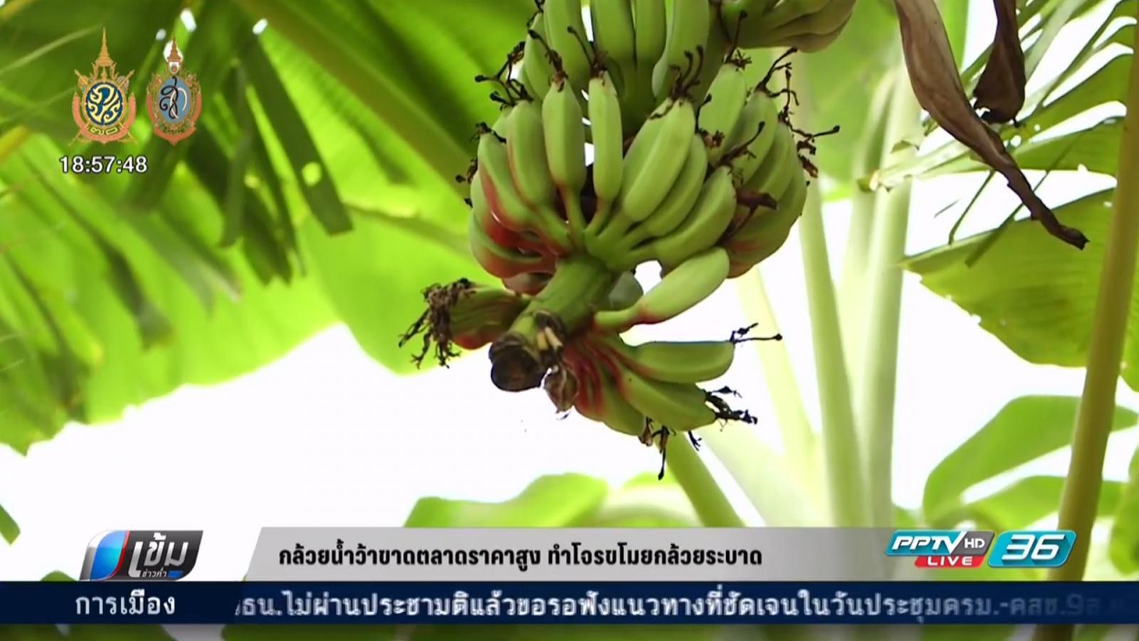กล้วยน้ำว้าขาดตลาดราคาสูง ทำโจรขโมยกล้วยระบาด