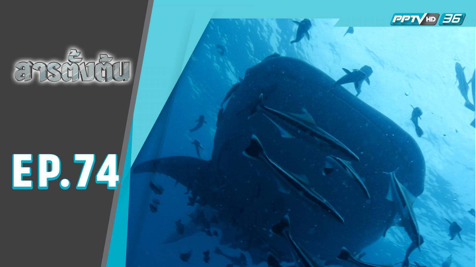 ลาก....ยักษ์ใต้สมุทร