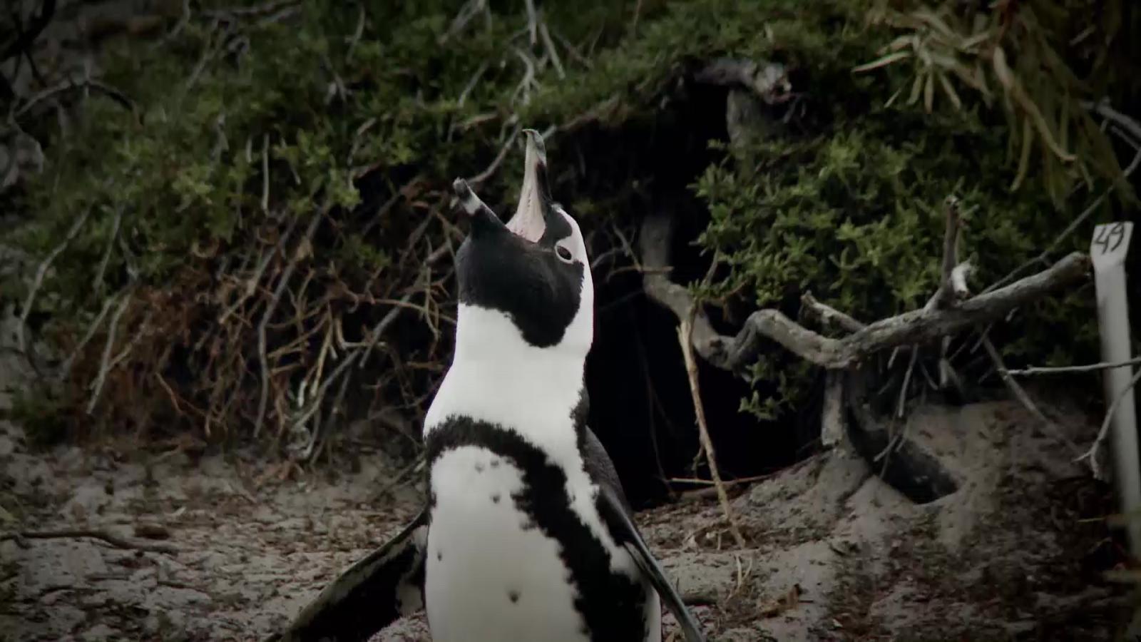 ชั่วโมง Discovery ตอน มหศัจรรย์แดนเพนกวิน ตอนที่ 1