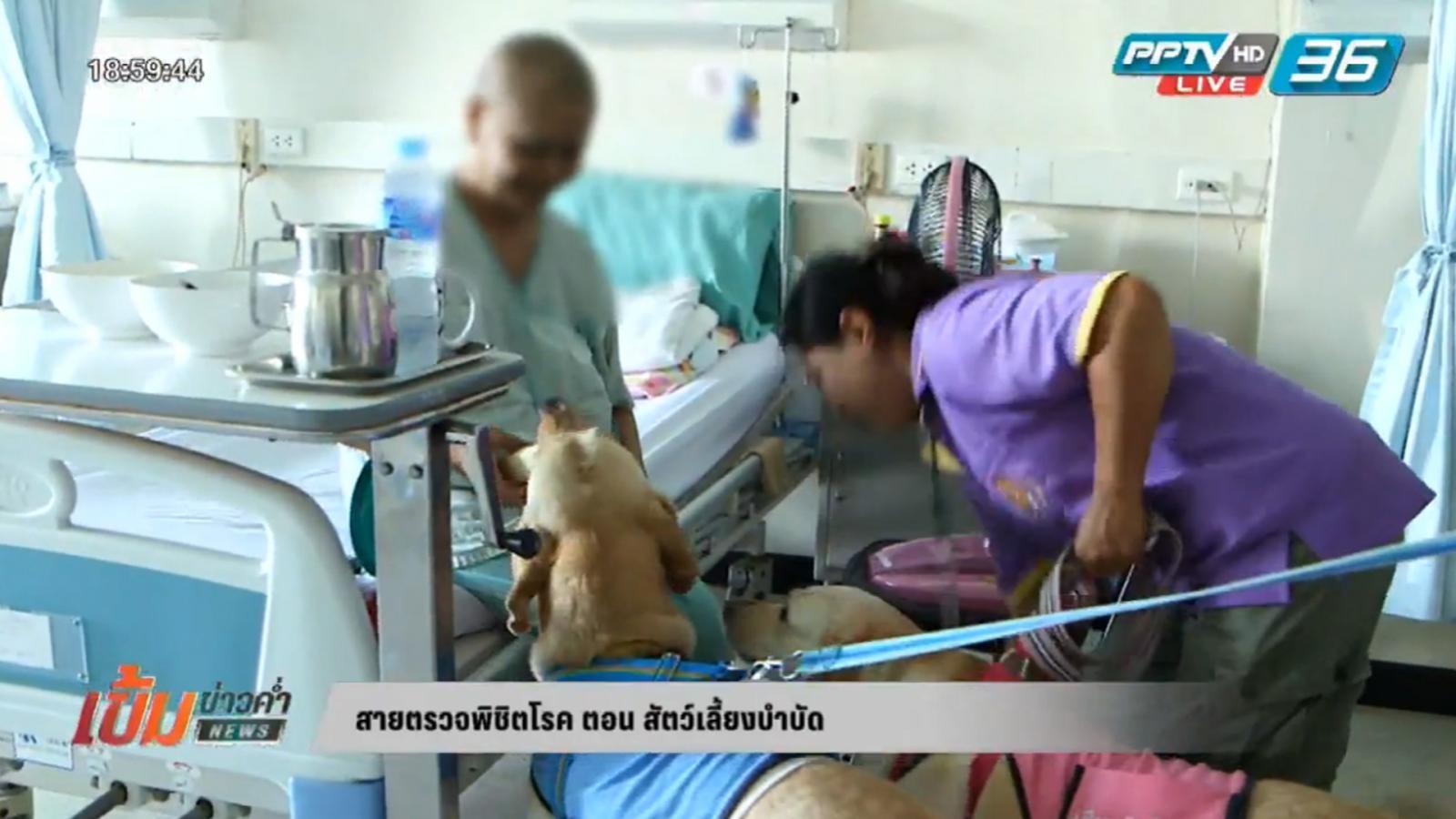 สายตรวจพิชิตโรค ตอน สัตว์เลี้ยงบำบัด