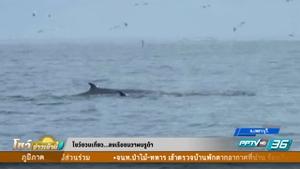 ล่องเรือชมวาฬบรูด้า - โชว์ชวนเที่ยว 3 ตุลาคม 2559
