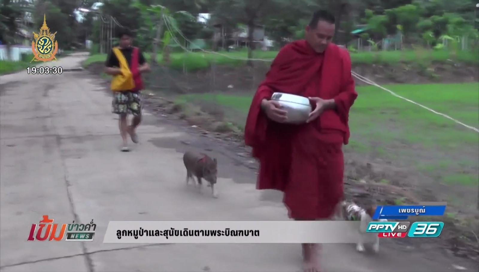 บุษบา หาเรื่องมาเป็นข่าว ลูกหมูป่าและสุนัขเดินตามพระบิณฑบาต กับ สุโขทัยใส่ผ้าถุง นุ่งโจงจูงมือเด็กเข้าวัด