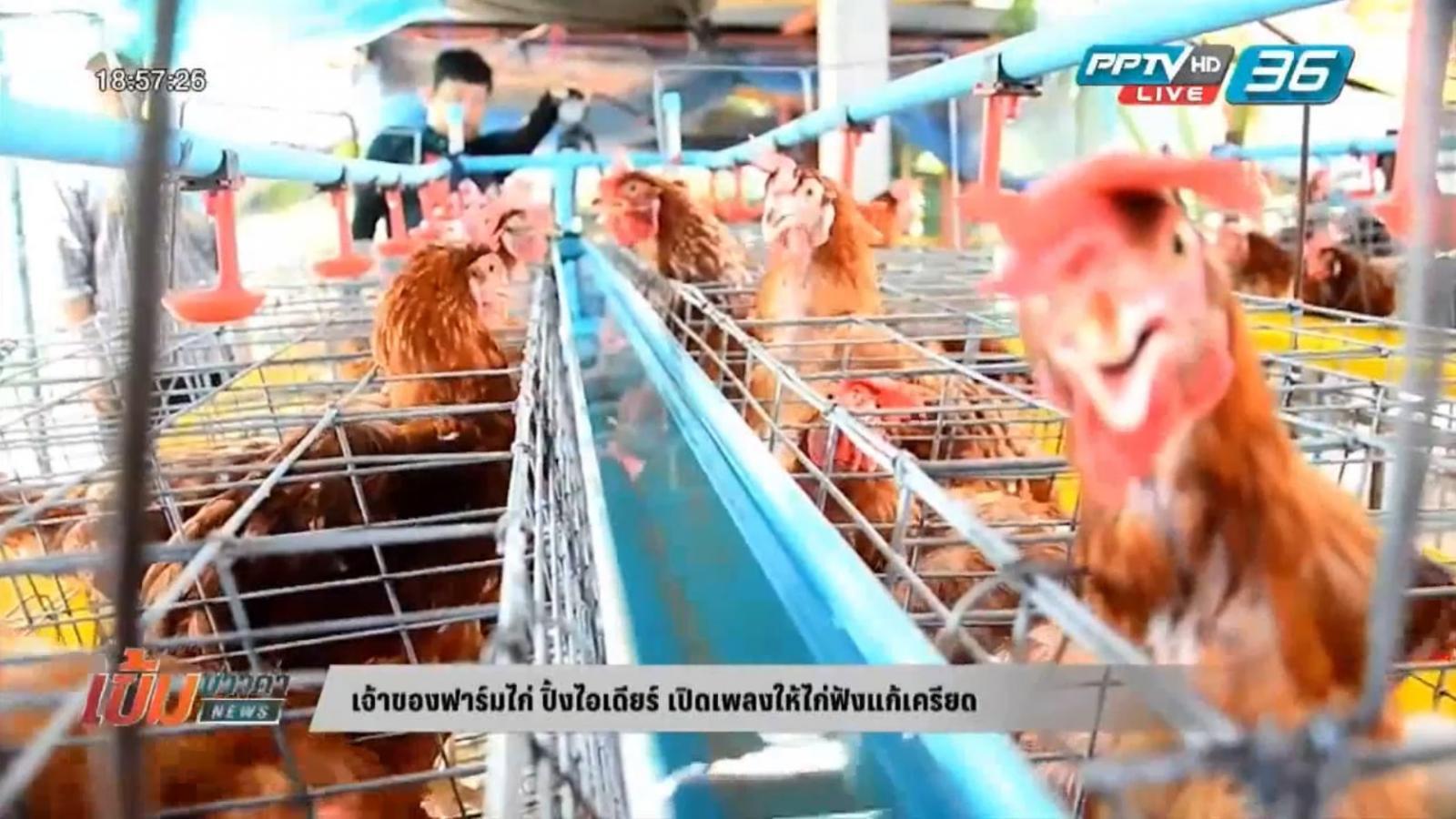 เจ้าของฟาร์มไก่ ปิ้งไอเดียร์ เปิดเพลงให้ไก่ฟังแก้เครียด