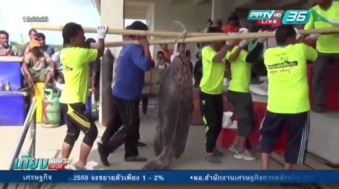 กองทัพเรือช่วยนักท่องเที่ยวชาวจีนจมน้ำ-แข่งตกปลาบาราฟิชชิ่งคัพได้ปลาหมอทะเลยักษ์หนัก 76 ก.ก. (คลิป)