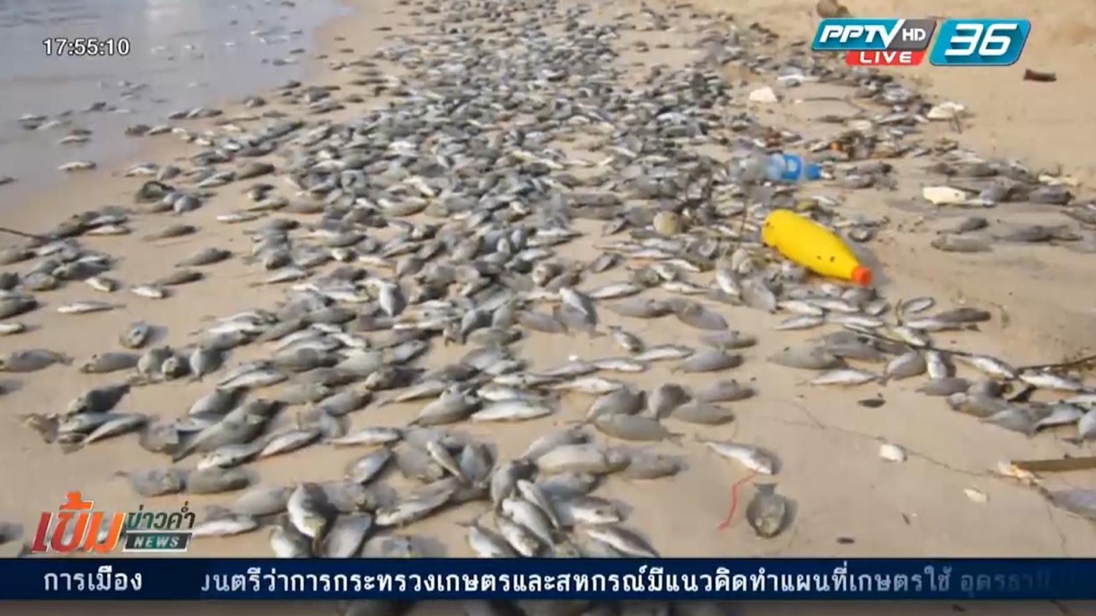 ชาวบ้านมาบตาพุดไม่เชื่อปลาตายเกิดจากแพลงก์ตอนบลูม